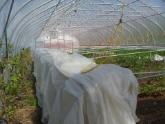 This experimental hothouse is inexpensive to set up and can grow crops ten months out of the year.