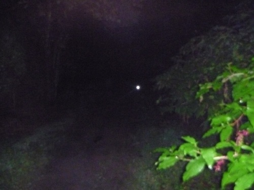 View from my headlamp during Run Woodstock 2012.