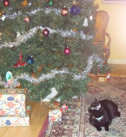 I do NOT understand Christmas. The humans put up all these great toys, then tell me I can't play with them!