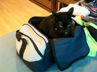 Gabby in my running bag