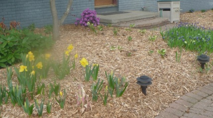 Front garden in May