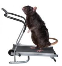 rat-treadmill-282x300