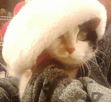 artemis-in-santa-hat